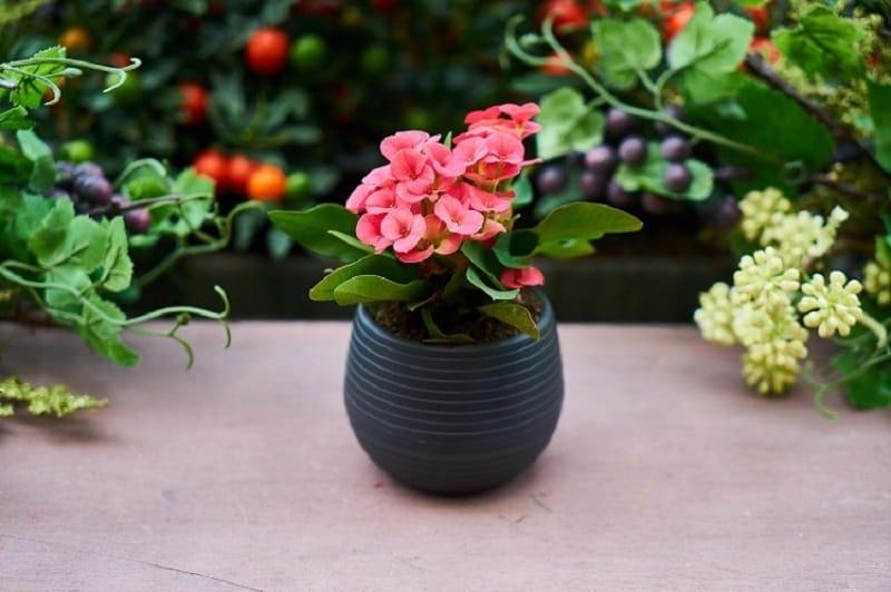 Garden Pots2