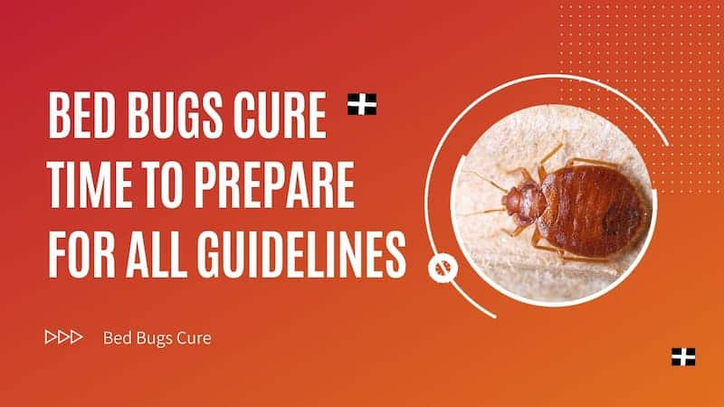 bed bugs cure